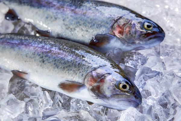 Regenbogenforelle frisch & küchenfertig ca. 350 g